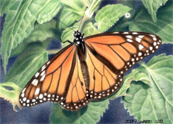 Monarch #4