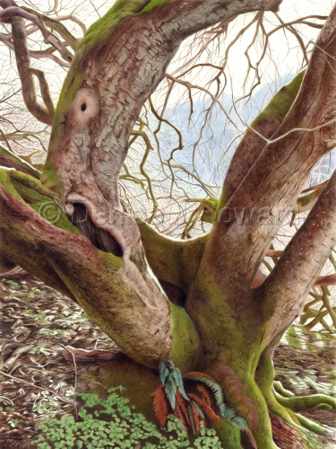 """Tree of Character, 15""""x20"""", colored pencil on Stonehenge paper"""