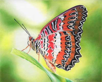 """Malay Lacewing"", accepted for UKCPS 12th Annual Open International Exhibition."