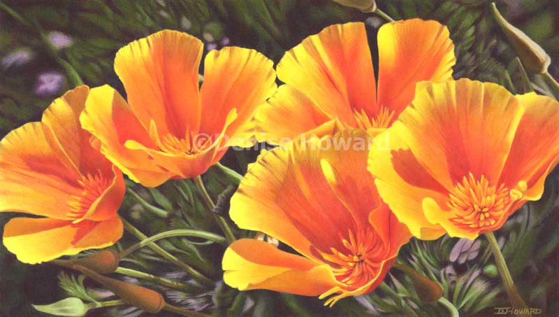 CaliforniaPoppyQuintet