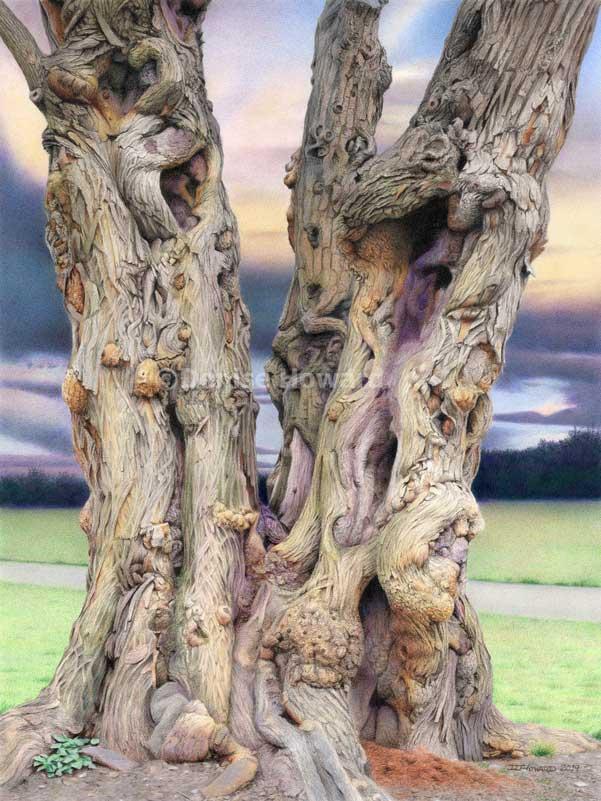 TreeOfWitness