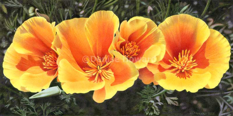 CaliforniaPoppyQuartet.jpg